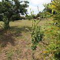 vente terrain Saint-Pierre-de-B½uf : Photo 3