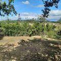 vente terrain Chantemerle-les-Blés : 20200706_095624_9F39A400-D2EE-4BBE-B588-C8DD8999FCC3